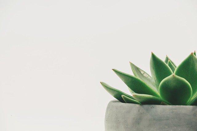 ¿Sabes lo que significa el color de tus plantas?